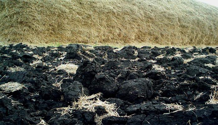 Украинские чернозёмы «под шумок» захватываются